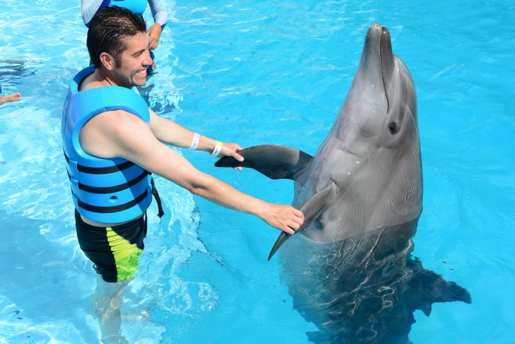 Дельфин шоу